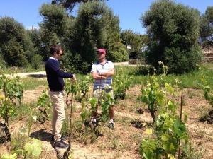 Touring the vineyard at Li Veli winery.