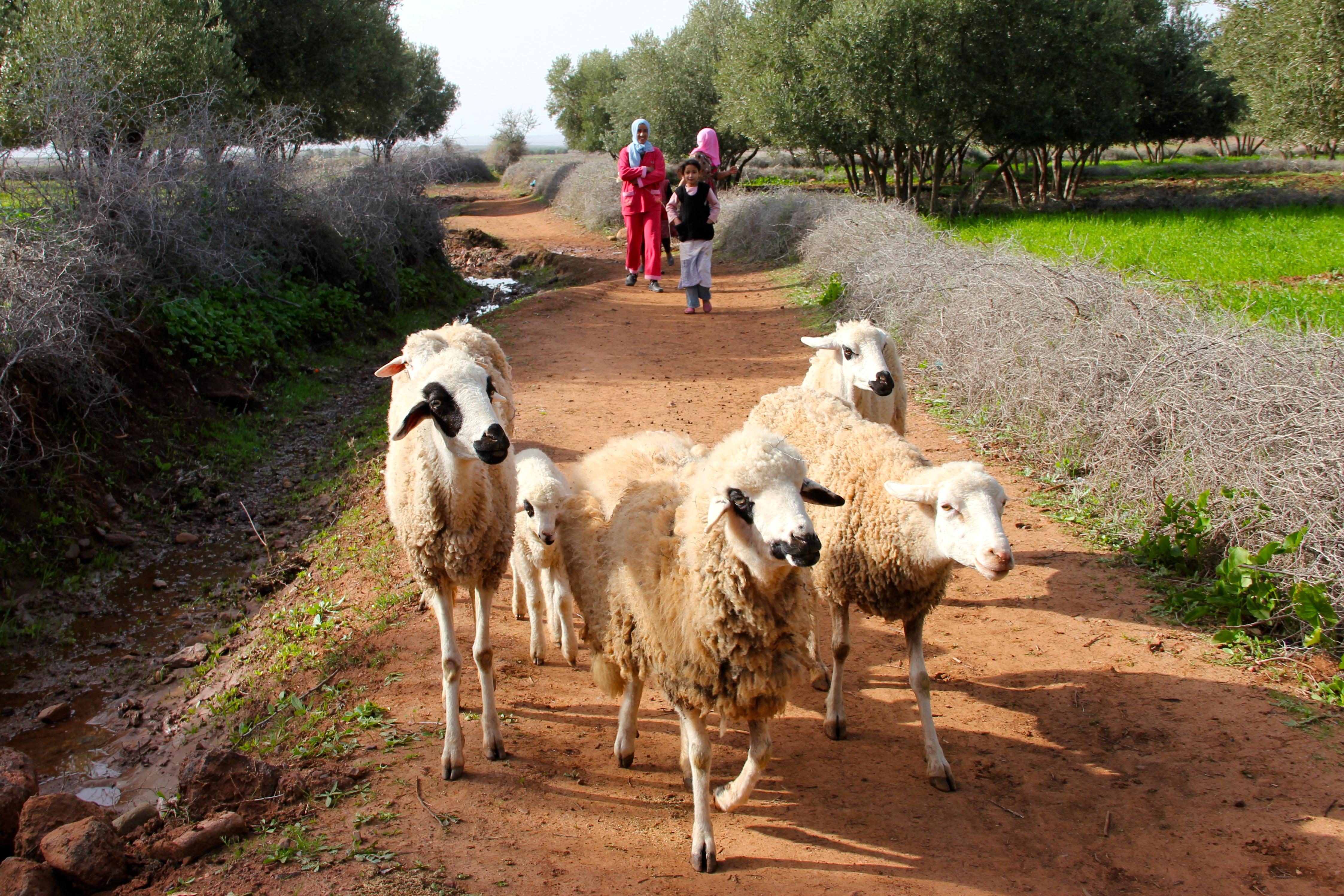 Mindful in Morocco - Caren Osten